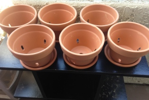 I chose medium-sized, well-holed, clay pots and appropriately sized saucers - one for each of the herbs I purchased.