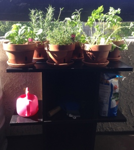 "My brand spankin' new herb garden, situated on a teeny tiny little cabinet on my teeny tiny little balcony. ""Though she be but little, she is fierce (Helena, A Midsummer Night's Dream)."""