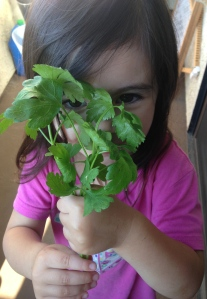 One of my littles helping with the harvest.
